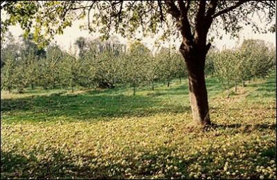 Verger à l'automne